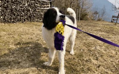 3 Anregungen zum gemeinsamen Spielen mit deinem Hund