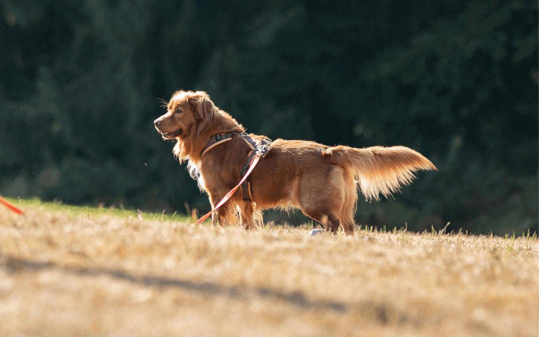 10 Tipps um mit einem reaktiven Hund zu leben