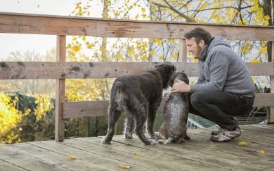 10 Tipps, um deinem unsicheren Hund mehr Sicherheit zu geben