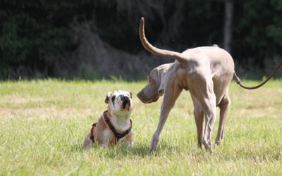 11 Tipps für Probleme bei Hundebegnungen an der Leine