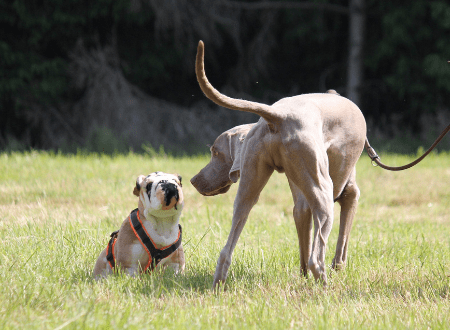 11 Basics für Probleme bei Hundebegnungen an der Leine