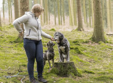 11 Fragen und Antworten zu Belohnungen im Hundetraining