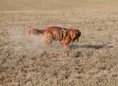 15 Anzeichen, an denen du Überforderung beim Hund erkennen kannst