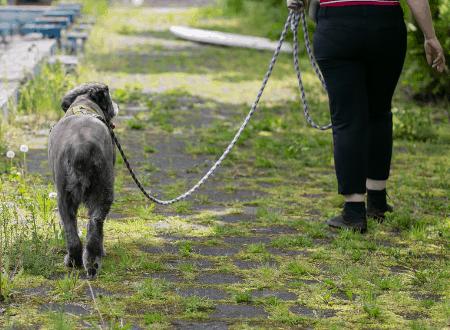 8 Tipps für die Leinenführigkeit bei Angsthunden