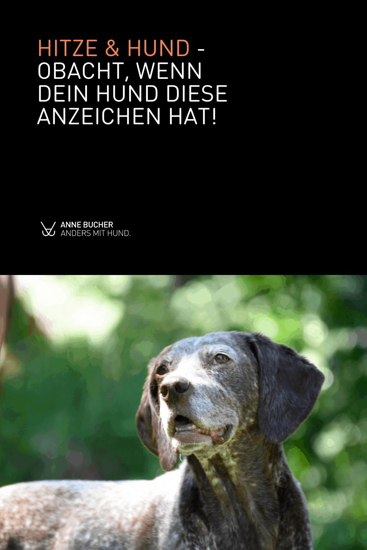 Hund und Hitze - So macht der Sommer Hunden Freude