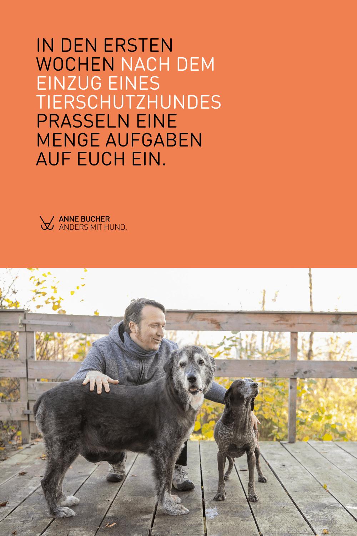 So gelingt der Einzug eines Tierschutzhundes