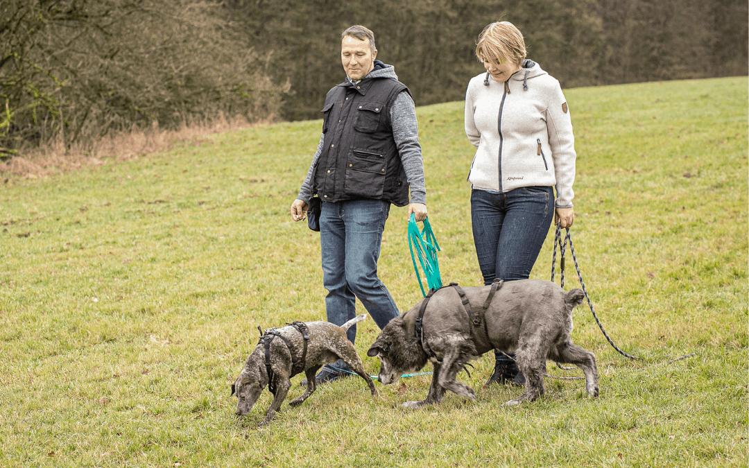 Dein Hund zieht an der Leine? – 11 Tipps für die Leinenführigkeit!