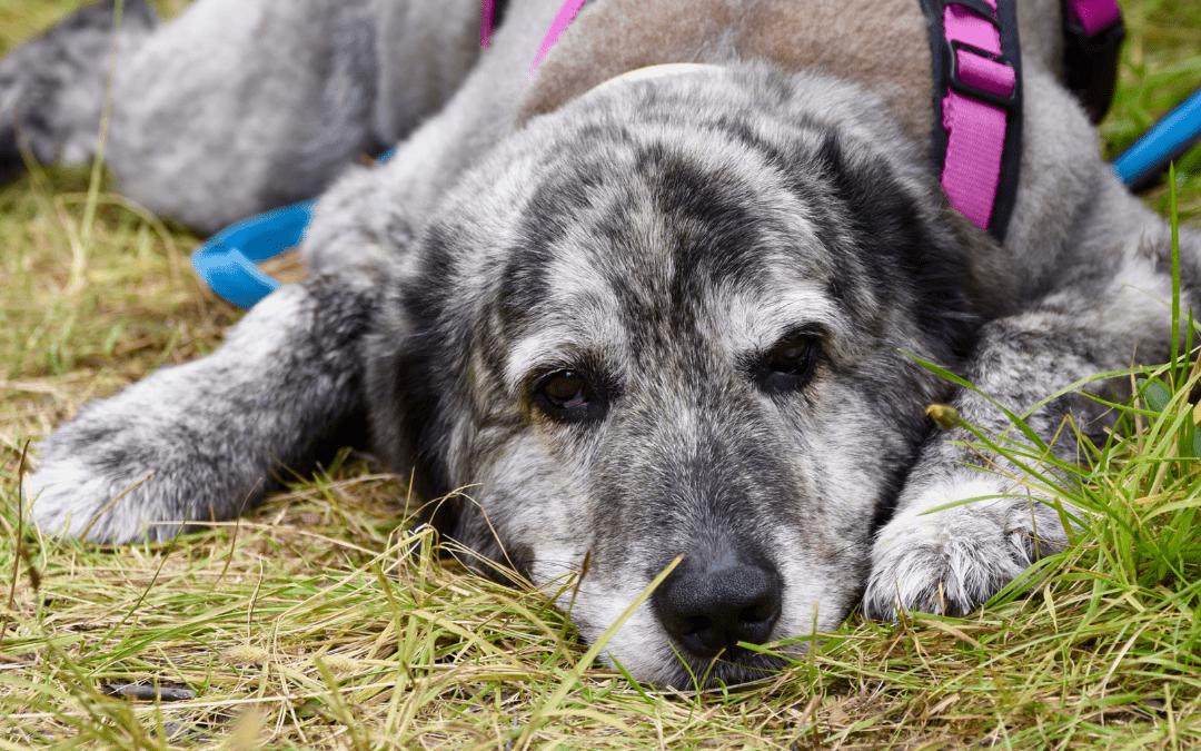 Geräuschangst beim Hund – Diese Dinge solltest du wissen
