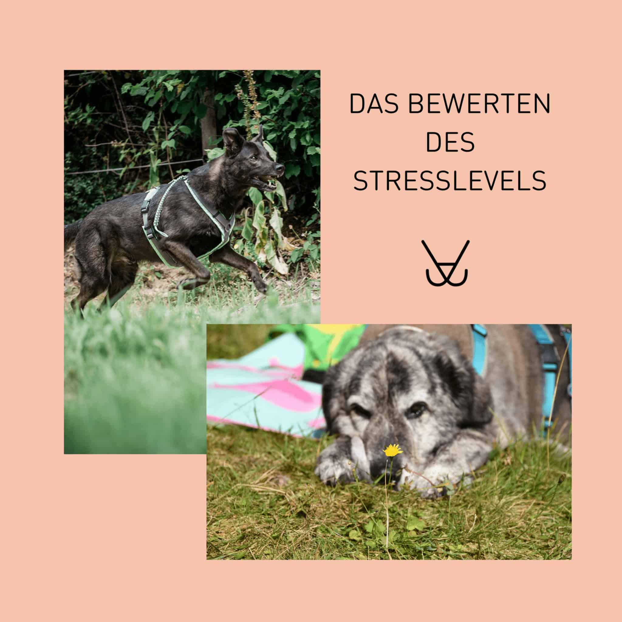 Wie ungesund ist Stress bei Hunden