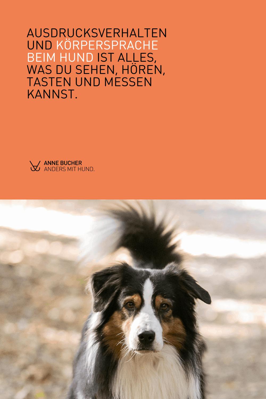 Die Körpersprache deines Hundes – Kenne die Basics