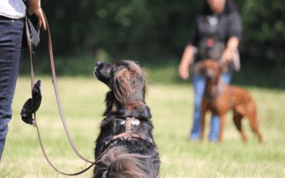 Die Individualdistanz deines Hundes