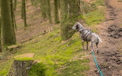 Die Körpersprache deines Hundes – Kenne die Basics!