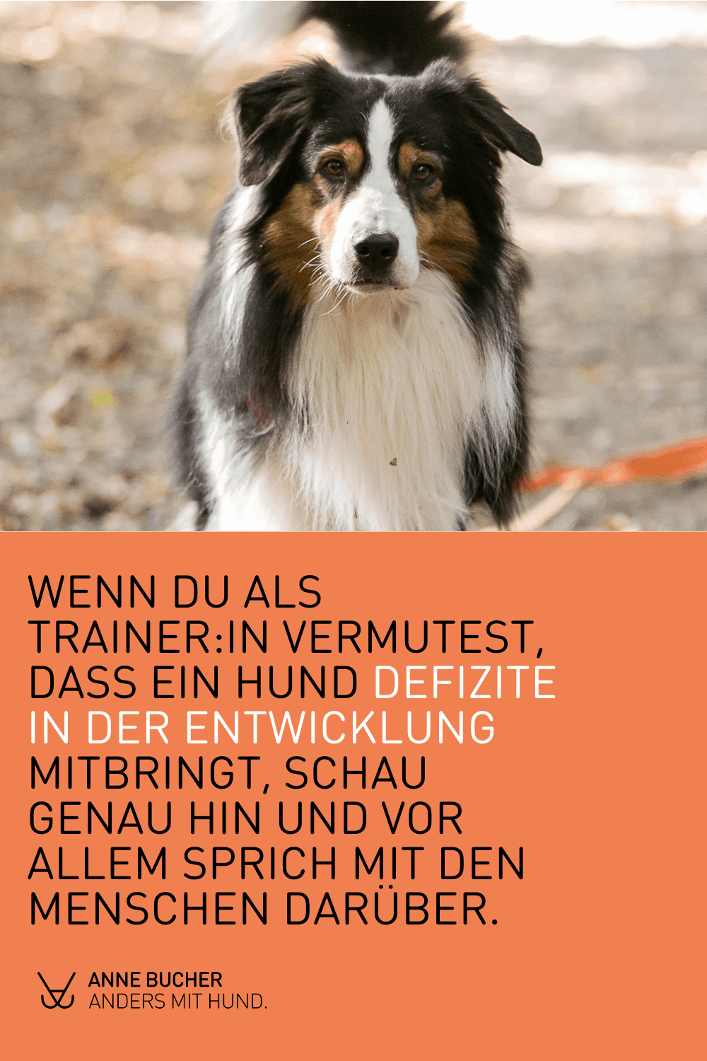 Das Deprivationssyndrom beim Hund
