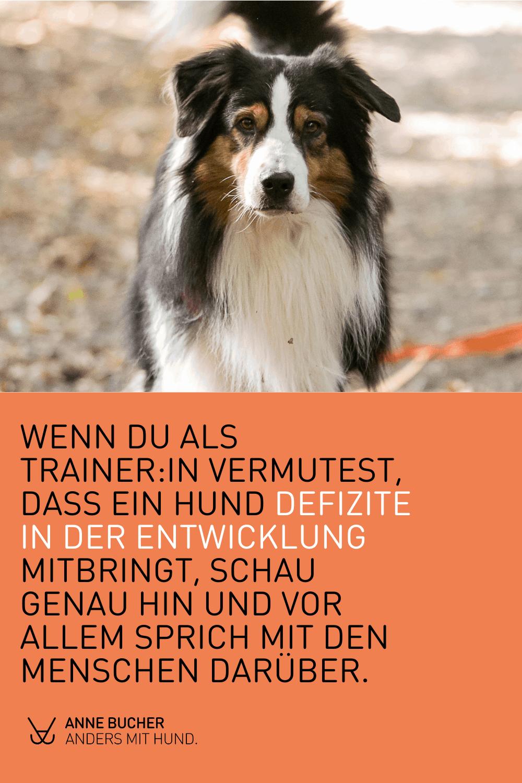 Das Deprivationssyndrom beim Hund