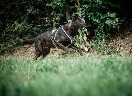 Freilaufende Hunde - Was tun?