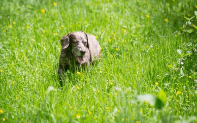 Hund und Hitze – So macht der Sommer Hunden Freude