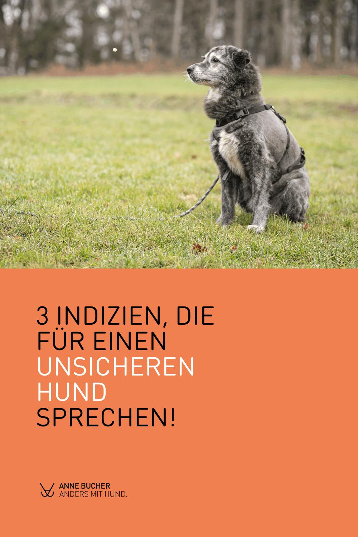 10 Tipps, un deinem Hund mehr Sicherheit zu geben