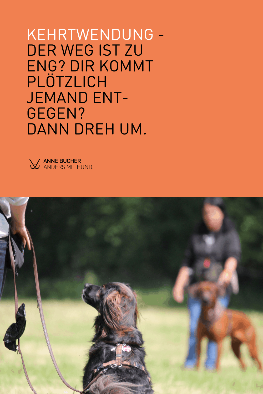 Aggressiver Hund an der Leine - So startest du dein Training
