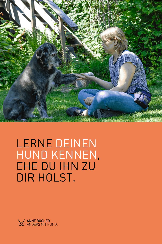 Worauf du bei der Auswahl eines Hundes achten solltest