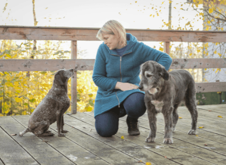 Mehrhundehaltung – Mehr Hunde, mehr Glück