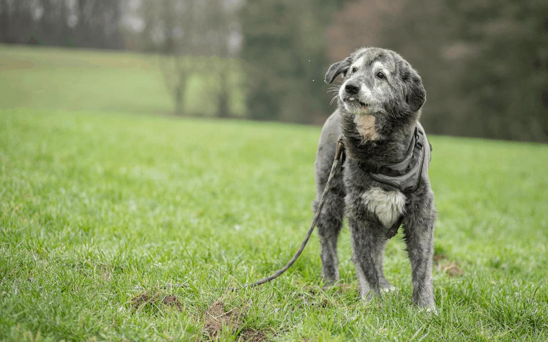 Mobbing auf der Hundewiese und in der Hundeschule
