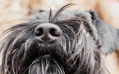 Nasenarbeit mit dem Hund