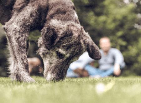 Operante Konditionierung – Die Portion gesunder Egoismus