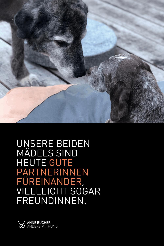Hundekontakte hinterfragt