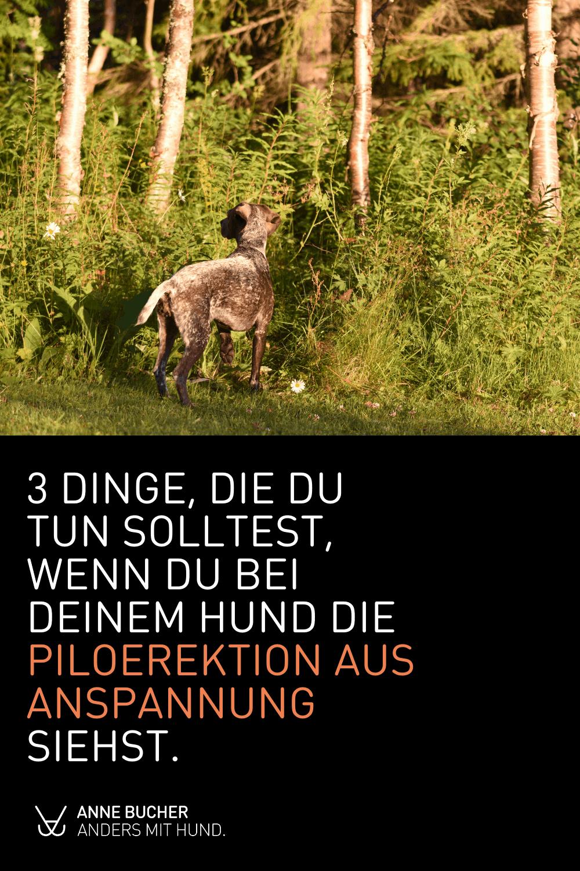Die Piloerektion beim Hund