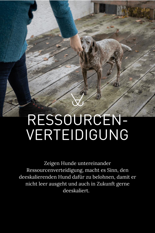 Ressourcenverteidigung beim Hund