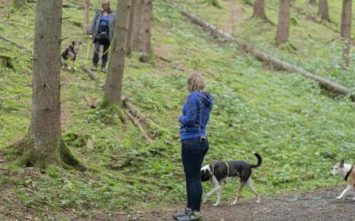 Social Walk – 15 Basics für dich und deinen Hund