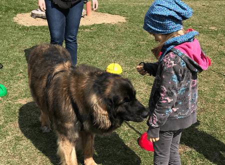 Therapiehund ausbilden für die Kinder- und Jugendarbeit