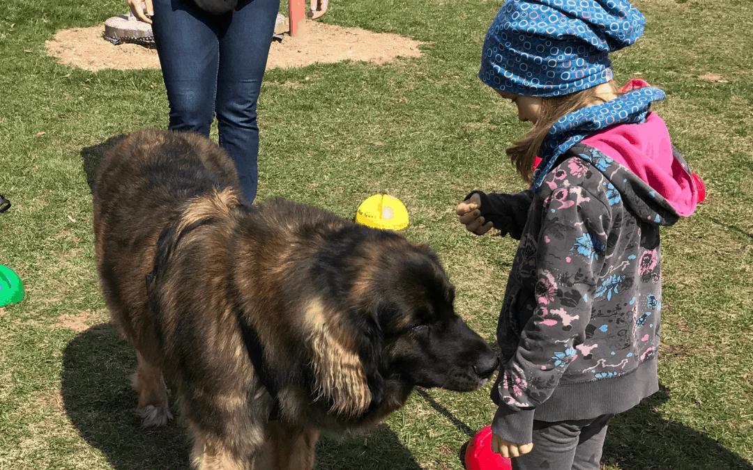 Therapiehund ausbilden für die Kinder- und Jugendarbeit – So geht es!