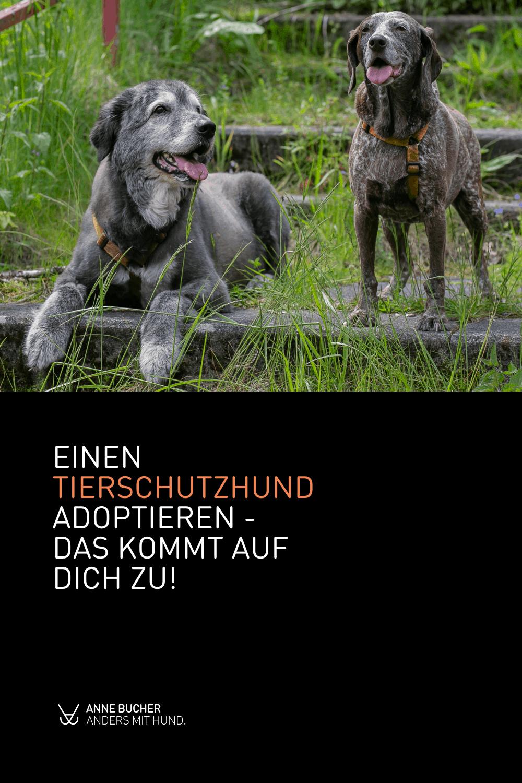 Einen Tierschutzhund adoptieren - Was kommt auf mich zu?