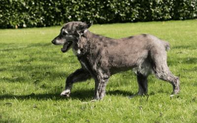 Der tut nix – Tipps zum Umgang mit freilaufenden Hunden
