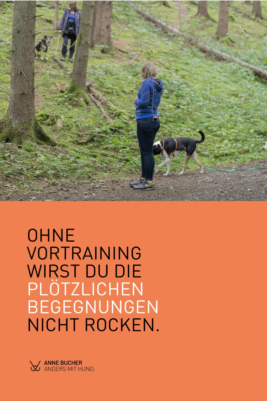 Tipps zum Umgang mit freilaufenden Hunden