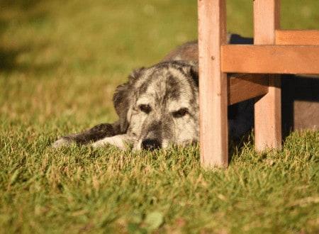 Keine Gewöhnung bei einem Angsthund