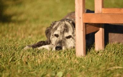 Warum du nicht auf Gewöhnung setzen solltest, wenn du einen Angsthund hast