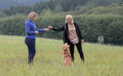 Warum möchtest du eine Hundetrainerausbildung machen?