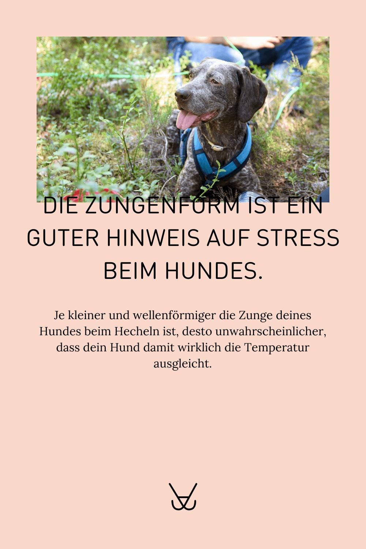 Stress beim Hund erkennen