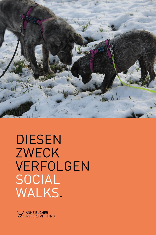 Social Walk -15 Basics für dich und deinen Hund