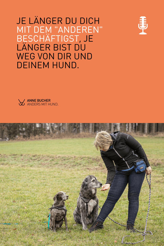 Ärgere dich nicht über andere Hundehalter