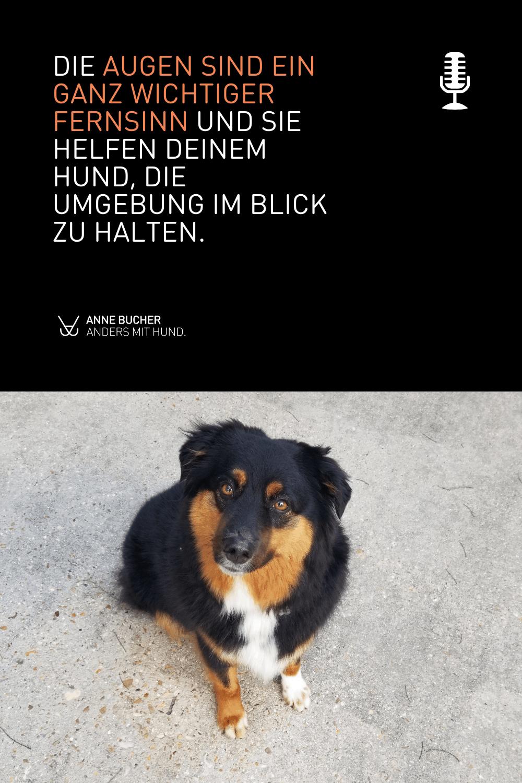 Die Welt aus der Sicht deines Hundes