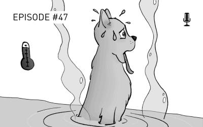 #47 Herausforderung Sommer & Hund – Was du unbedingt beachten solltest