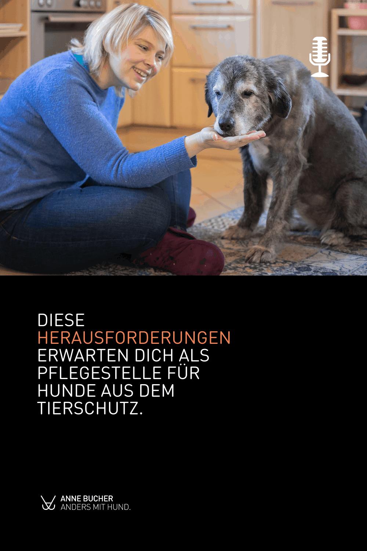 Ein Pflegehund dazu - Retten auf Kosten der eigenen Hunde