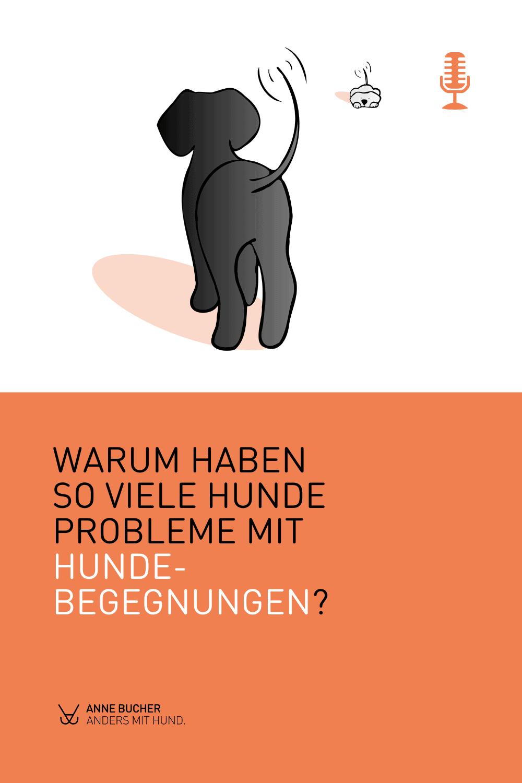 Warum haben so viele Hunde Probleme mit Hundebegegnungen?