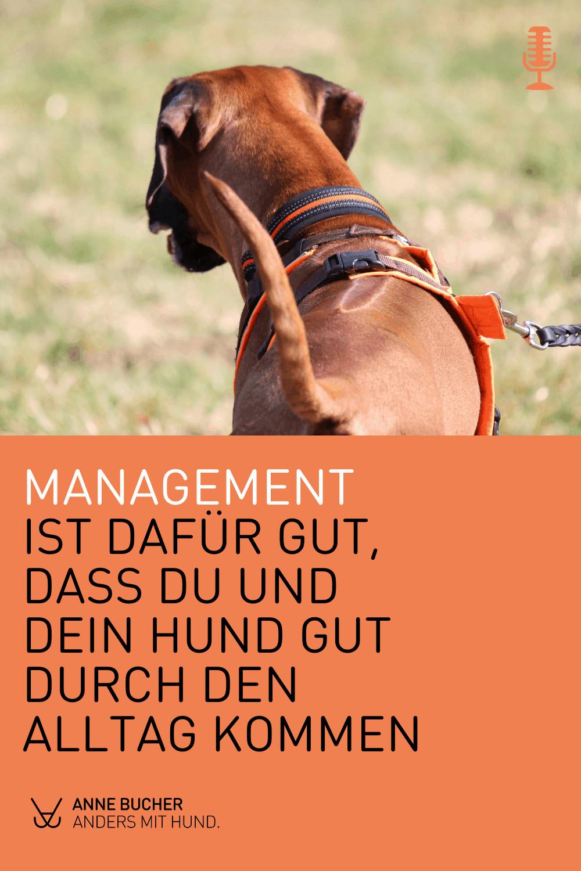 Management im Hundetraining