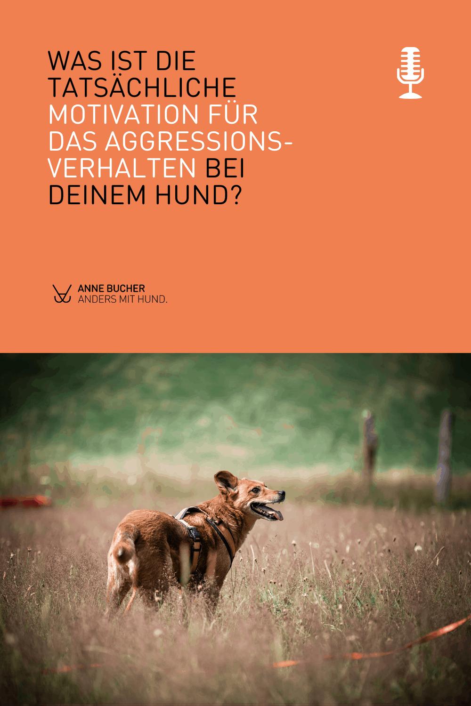 Warum Aggression nicht böse ist