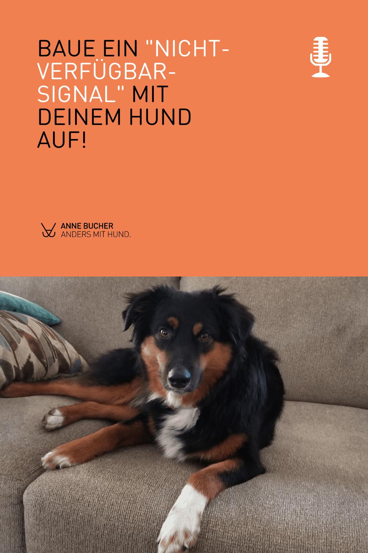 Home-Office und Co. haben meinen Hund zum Schattenhund gemacht
