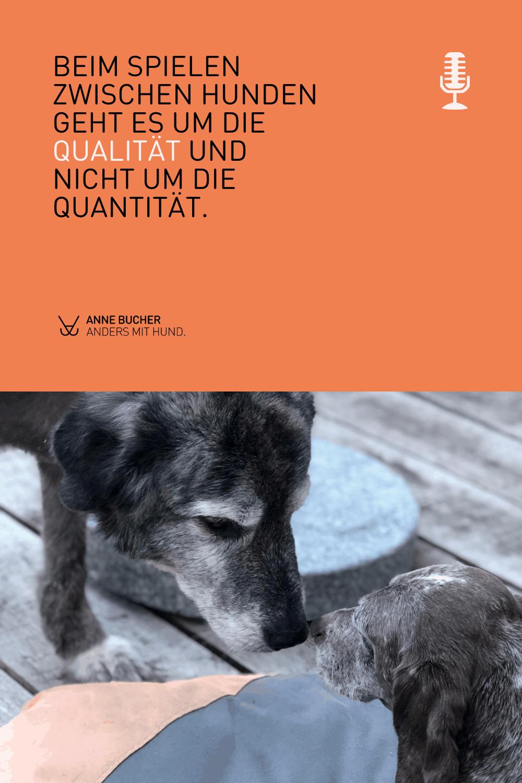 Spielen zwischen Hunden
